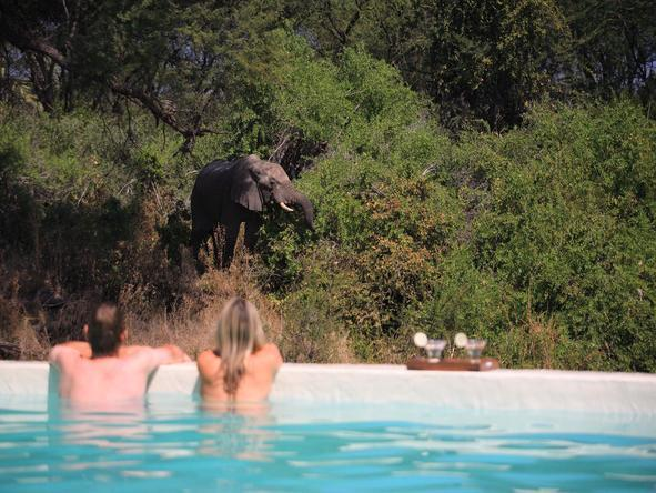 Jongomero - elephant next to pool