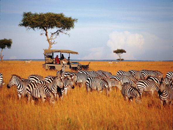 Saruni Mara - endless savannah on a game drive
