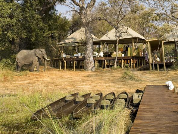 Xaranna Tented Camp - Wildlife