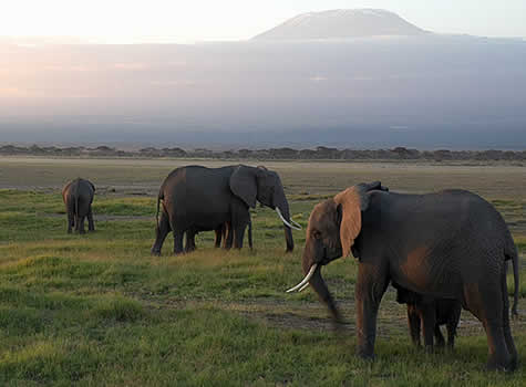 Kili to Coast Safari Soiree
