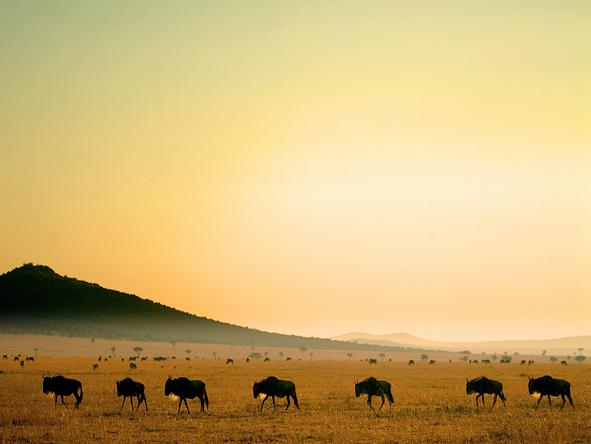 Magnificent Amboseli & Mara Retreat