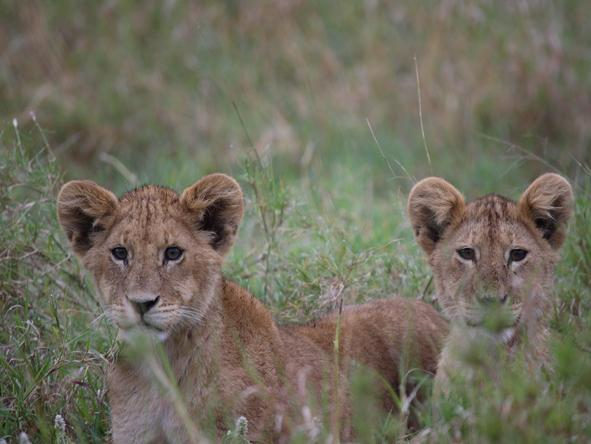 Classic Kenya & Tanzania Highlights