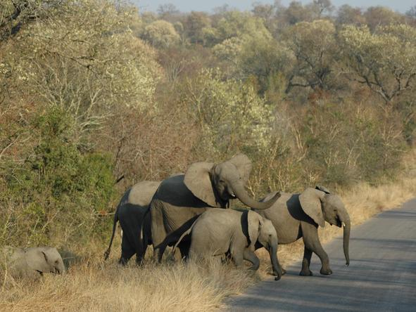 Adventurous Kruger Safari