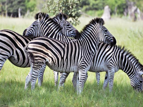 Vic Falls & Botswana Migration Safari