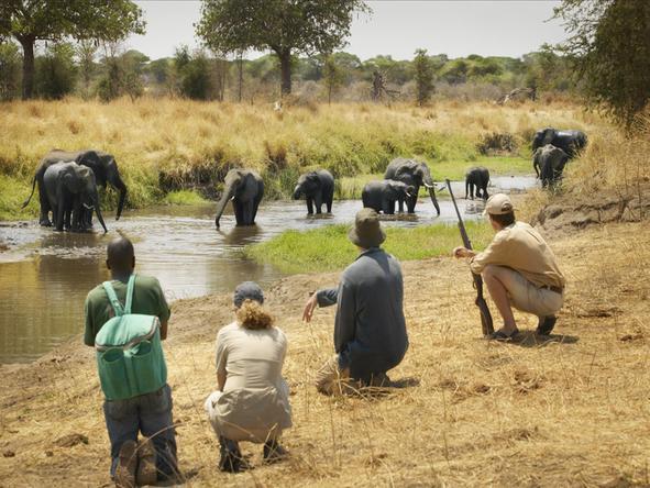 Tailormade Kenya & Tanzania Safari