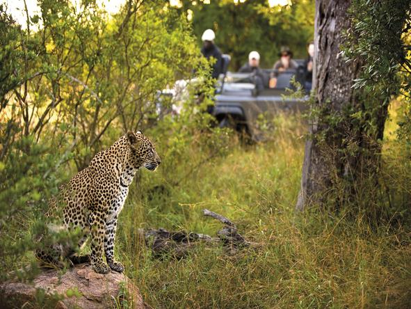 Ultimate Kruger & Quirimbas Explorer