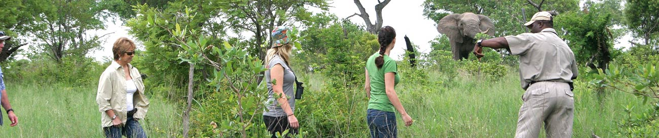 Kruger Park Family Safari - discover the magic of the Kruger bushveld on walks and game drives with your family