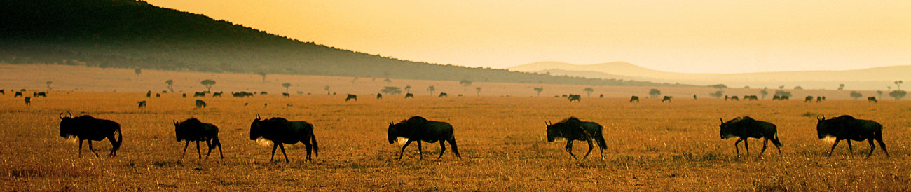 Luxury Migration, Lake & Crater Safari