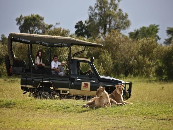 Elephant Pepper Camp- Game Drive