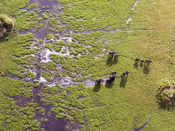 Marvel at the spectacular scenery while flying over the Okavango Delta in a small plane.