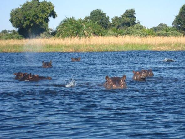 If you're looking for a combination water and land safari, Botswana's many rivers make it an easy option.