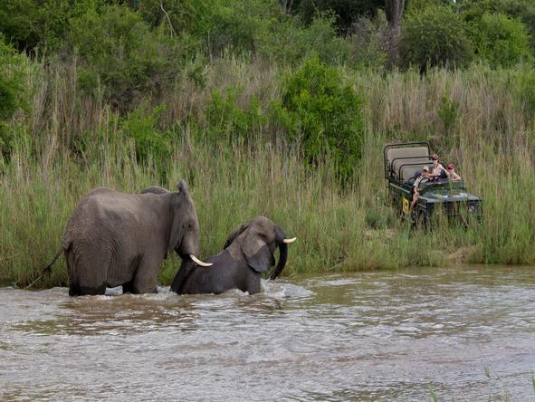The Sabi Sands adjacent to the Kruger Park offers superb Big 5 gameviewing.