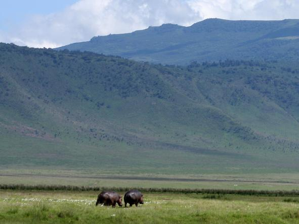The Ngorongoro Crater is commonly known as 'Africa's Wildlife Zoo', due to its huge numbers of animals relative to the area.