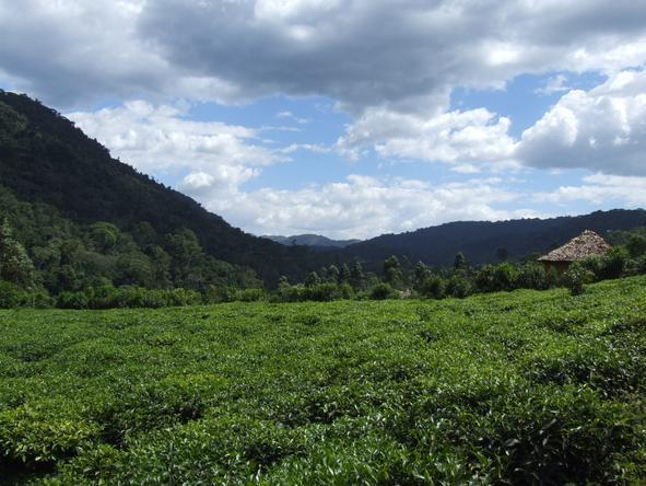 Uganda is quite a rural country, with plenty of fields, hills and valleys dedicated to farming.