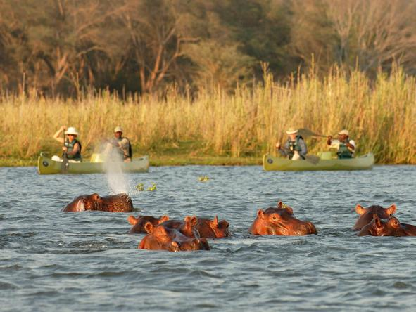 Hippos are considered one of Africa's most dangerous animals - remember to keep your distance!