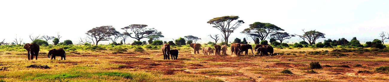 Discover Kenya Wilderness