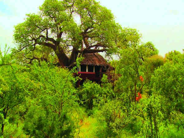 Tarangire Treetops - tree suites