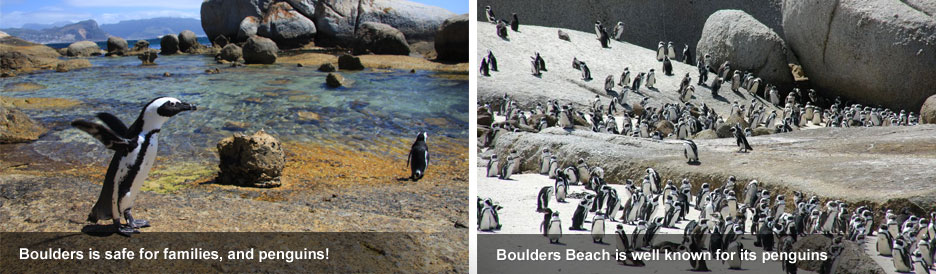 Cape Town's Best Beaches - Boulders Beach