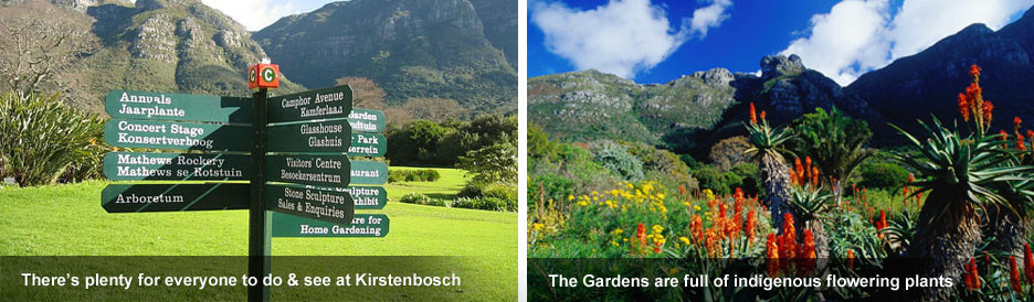 Kirstenbosch Gardens - botanical paradise