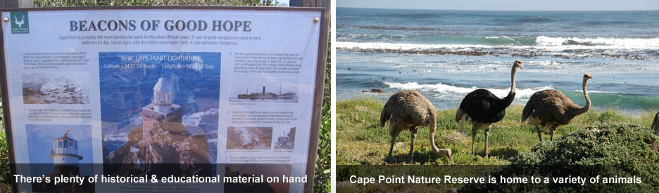 Cape Point - information & wildlife