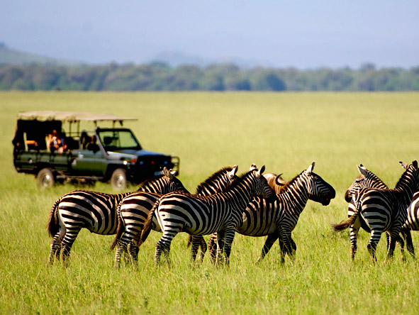 Luxury Safaris gallery4