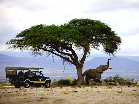 Luxury Safaris gallery5