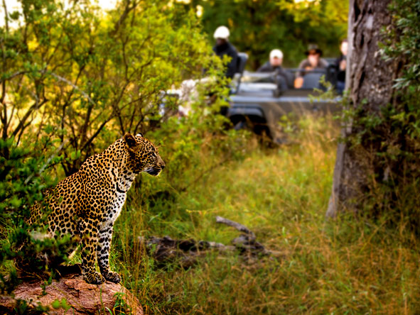 Luxury Safaris gallery7
