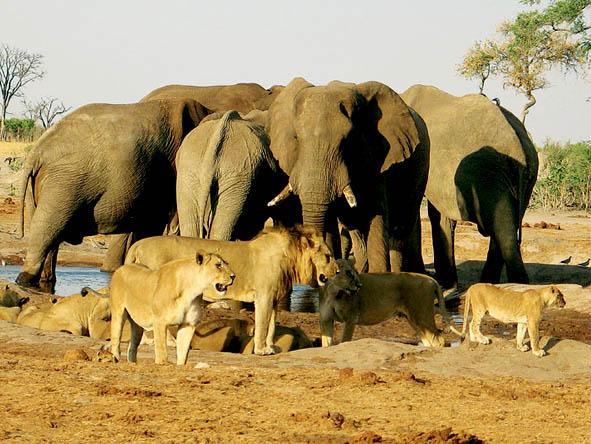 55 Botswana Gallery 16