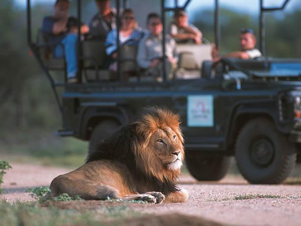 6333 Kruger 4