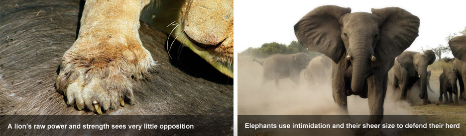 Elephant Eaters of the Savuti - raw power vs raw size