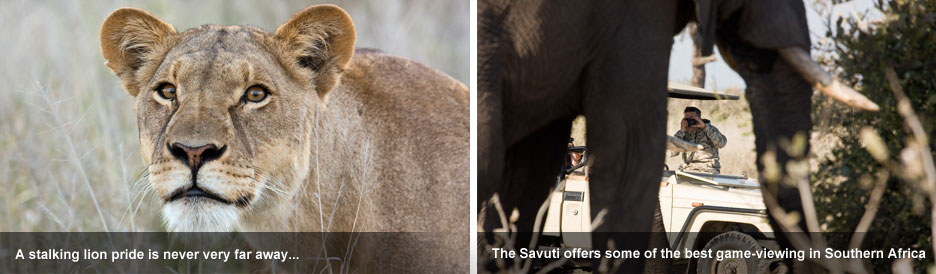 Elephant Eaters of the Savuti - exceptional game-viewing awaits in the Savuti, Botswana