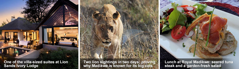 Madikwe and Kruger - blog 2