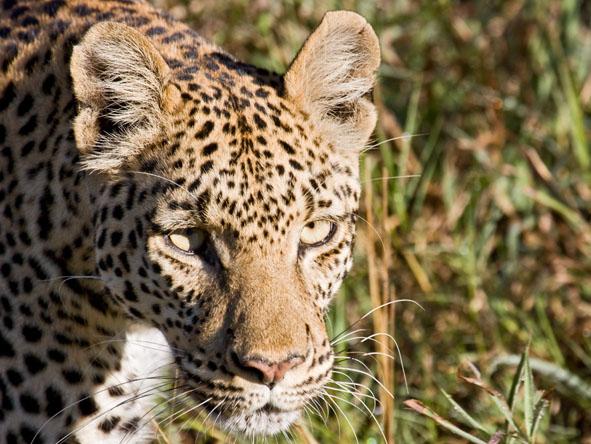 6371 - Okavango Delta Gallery9