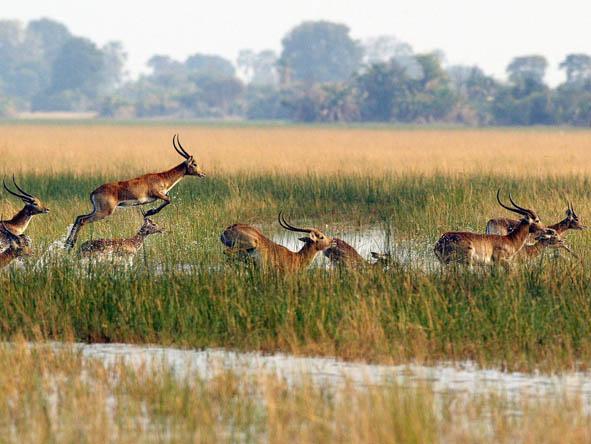 6371 - Okavango Delta Gallery12