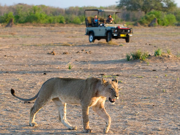 A Remote Luxury Safari