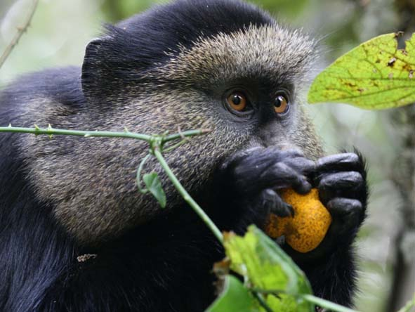 Rwanda Gallery2