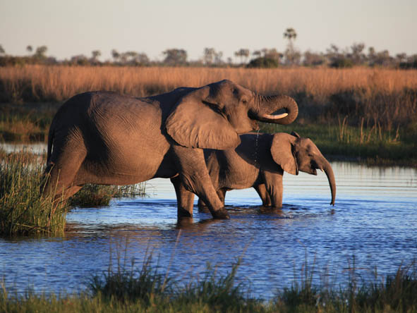 Botswana Honeymoon Gallery2