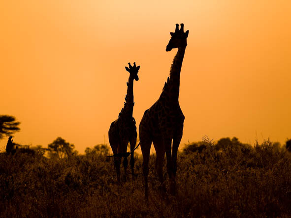 Botswana Honeymoon Gallery3
