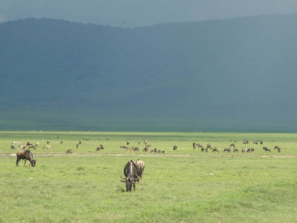 Ngorongoro Crater Gallery3