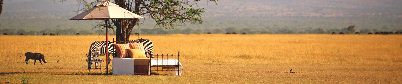 Sensational Singita Grumeti Safari