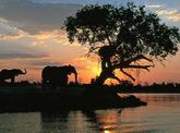 7 Day Explore Botswana