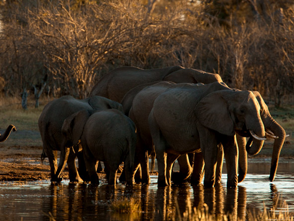 Selinda Explorers Camp - elephants