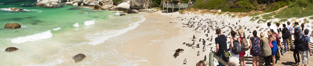 Boulders Beach - famous for its penguins