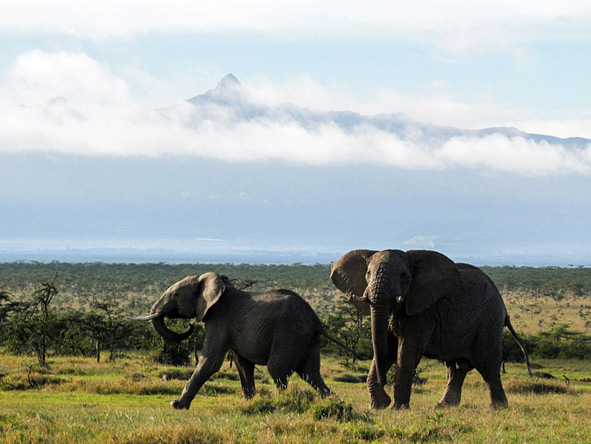 Segara Retreat - Roaming elephants