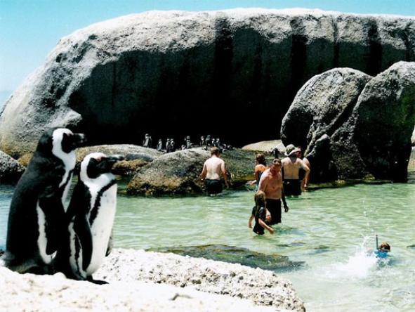 Boulders Beach - swim with the penguins