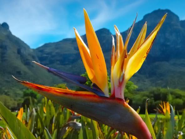 Kirstenbosch Gardens - botanical heritage