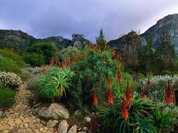 Kirstenbosch Gardens - gold-medal winners