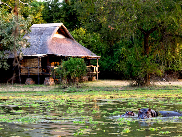 Zambia's South Luangwa & the remote Lake Malawi - Hippo watching