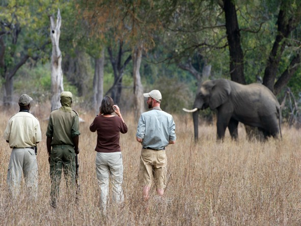 Zambia's South Luangwa & the remote Lake Malawi - game walking