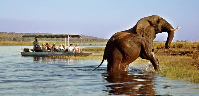 Botswana Seasonal Guide - watch game from the water